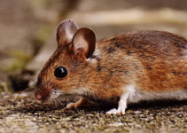 Rodent Control Measures