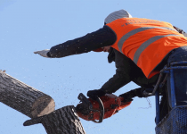 tree removal processes in North Sydney