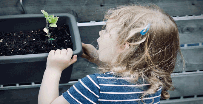 Fast Growing Plants For Science Projects